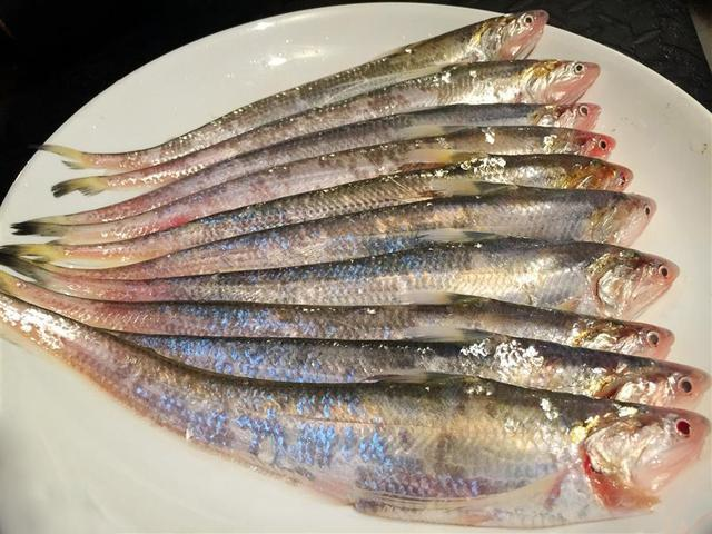 The best five kinds of fish in the country, all of them are very cattle, and even worse